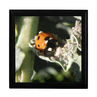 British 7 Spot Ladybug Gift Box