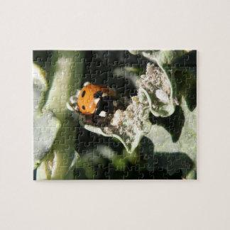 British 7 Spot Ladybug Puzzle