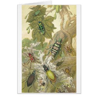 British Beetles Card