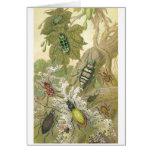 British Beetles Greeting Card