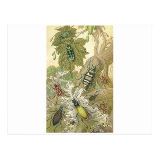 British Beetles Post Cards