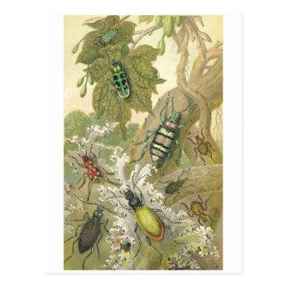 British Beetles Postcard
