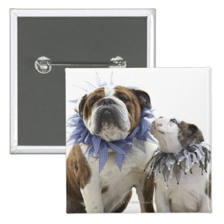British bulldog and puppy wearing jester collar, 15 cm square badge