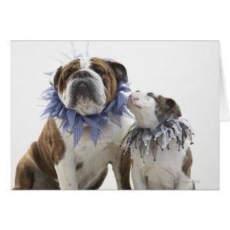 British bulldog and puppy wearing jester collar, greeting card