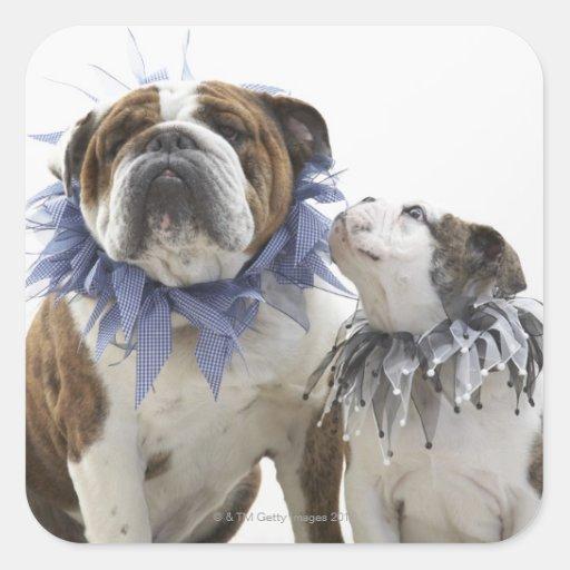 British bulldog and puppy wearing jester collar, square sticker