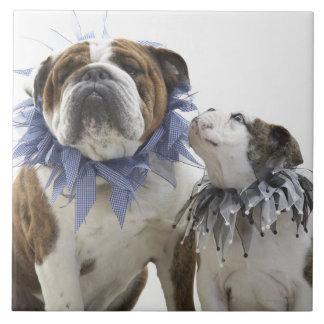 British bulldog and puppy wearing jester collar, tile