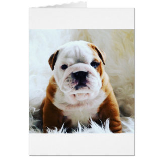 British bulldog blank card