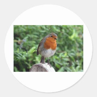 British Robin Classic Round Sticker