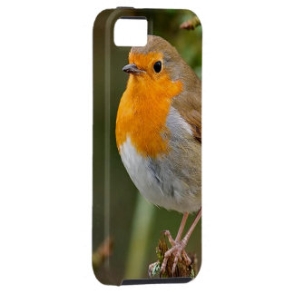 British Robin Redbreast iPhone 5 Covers