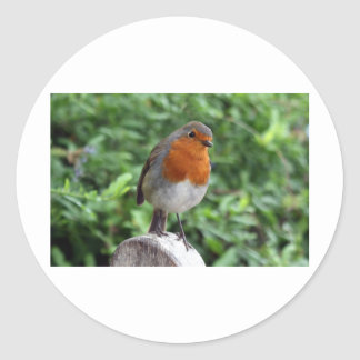 British Robin Round Sticker