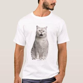 British Shorthair (4 years old) T-Shirt