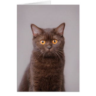 British shorthair cat card