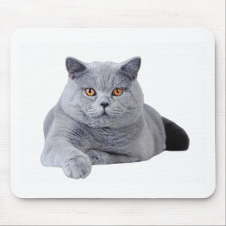 British shorthair cat mouse mat