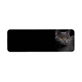 British Shorthair Cat Return Address Label