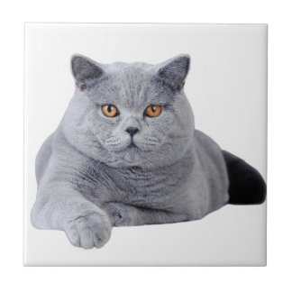 British shorthair cat small square tile