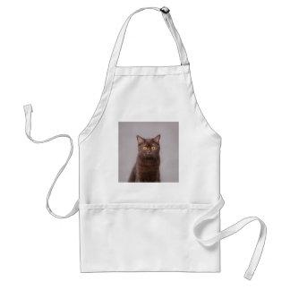 British shorthair cat standard apron