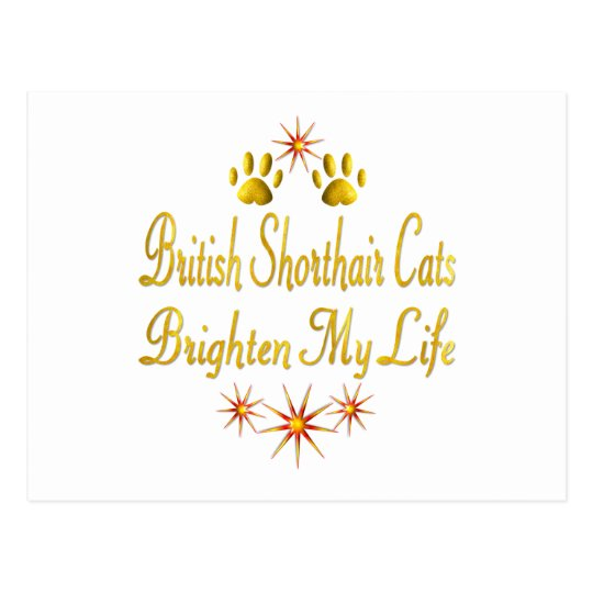 British Shorthair Cats Brighten My Life Postcard