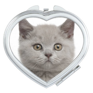 British Shorthair Kitten (10 weeks old) 2 Compact Mirror
