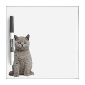 British Shorthair Kitten (10 weeks old) 2 Dry Erase Boards