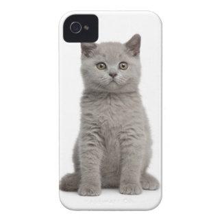 British Shorthair Kitten (10 weeks old) 2 iPhone 4 Case-Mate Cases