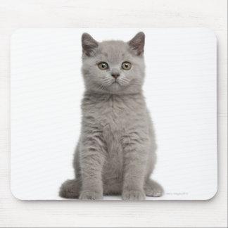 British Shorthair Kitten (10 weeks old) 2 Mouse Mat