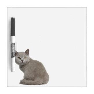 British Shorthair Kitten (10 weeks old) Dry Erase Board