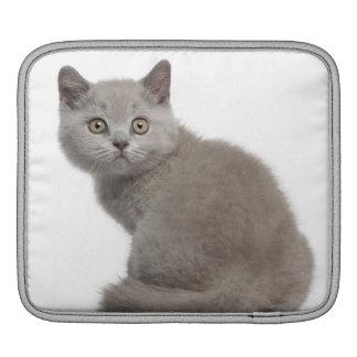 British Shorthair Kitten (10 weeks old) iPad Sleeve