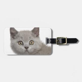 British Shorthair Kitten (10 weeks old) Luggage Tag
