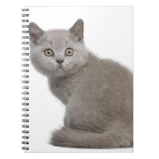 British Shorthair Kitten (10 weeks old) Notebook