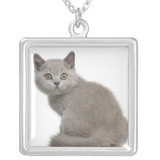 British Shorthair Kitten (10 weeks old) Silver Plated Necklace