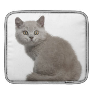 British Shorthair Kitten (10 weeks old) Sleeves For iPads
