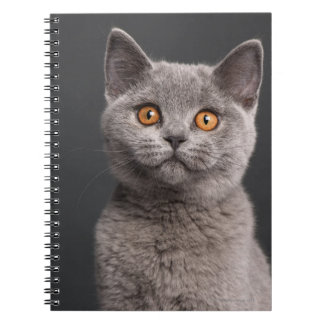British Shorthair kitten (3 months old) Notebooks