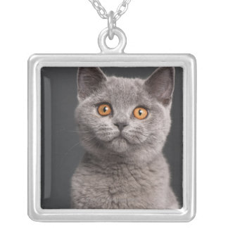 British Shorthair kitten (3 months old) Silver Plated Necklace