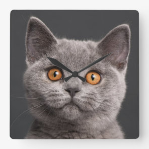 British Shorthair kitten (3 months old) Square Wall Clock