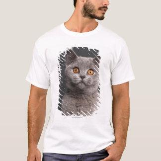 British Shorthair kitten (3 months old) T-Shirt