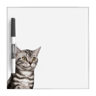 British Shorthair kitten (4 months old) Dry Erase Board