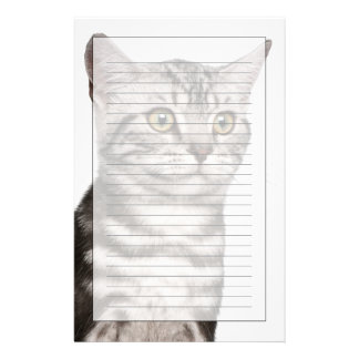 British Shorthair kitten (4 months old) Stationery