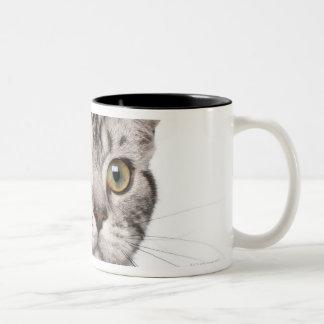 British Shorthair kitten (4 months old) Two-Tone Coffee Mug