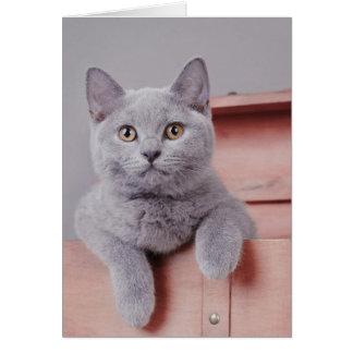 British shorthair kitten card