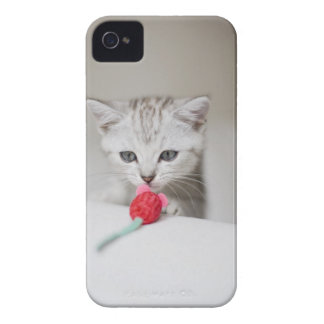 British shorthair kitten smelling toy mouse iPhone 4 case