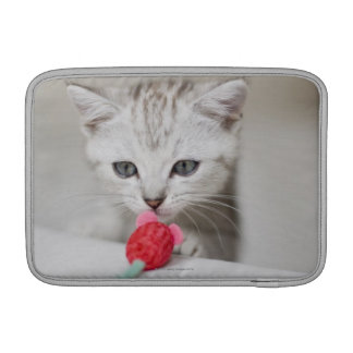 British shorthair kitten smelling toy mouse sleeve for MacBook air