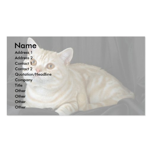 British Shorthair, red silver tabby Business Card Template