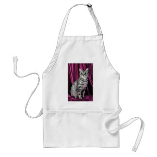 British Shorthair, silver spotted Apron