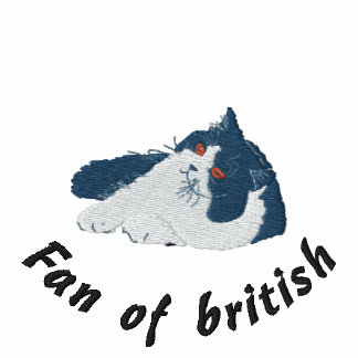 British to longhair blue and white