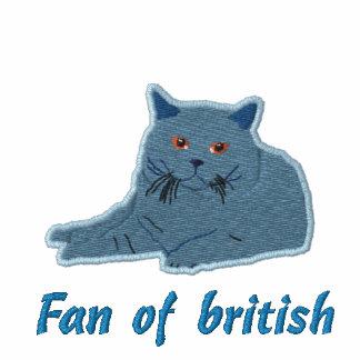 british to shorthair bordery