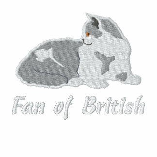 British to shorthair lilac and white