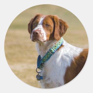 Brittany dog beautiful photo round stickers