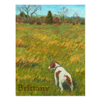 Brittany in the Field Postcard