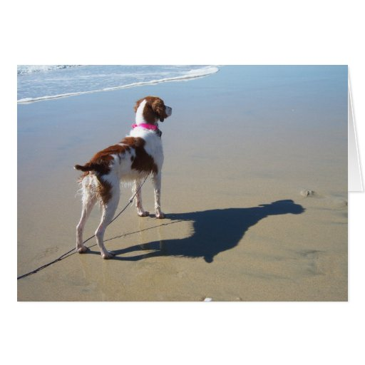 BRITTANY ON THE BEACH GREETING CARD
