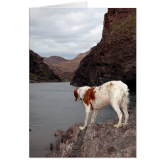 BRITTANY OVER THE COLORADO RIVER GREETING CARD